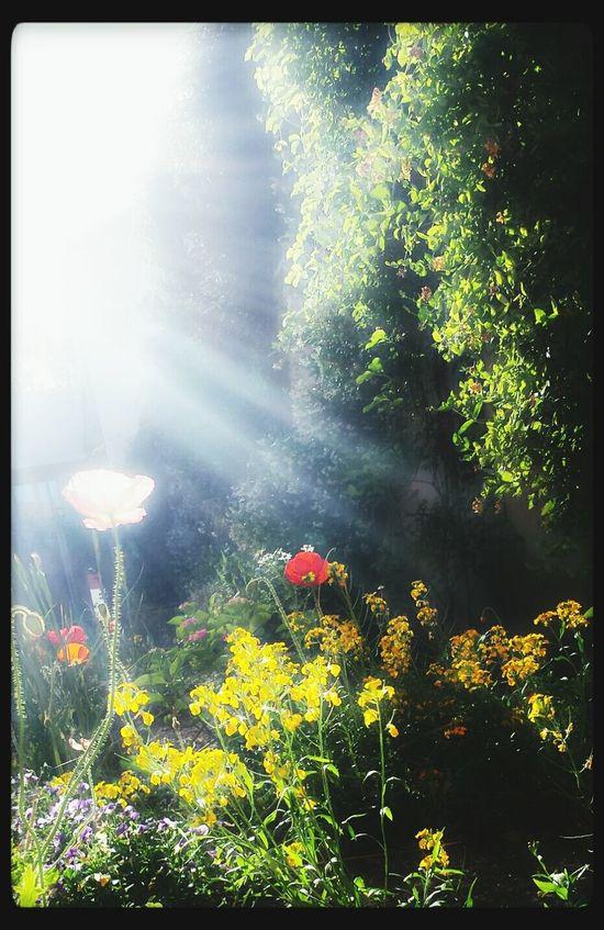 Sunshineday Beautiful Day Flowers,Plants & Garden Beautiful Nature Sunshine Enjoying Life Colorphotography Naturecolor Sun ☀