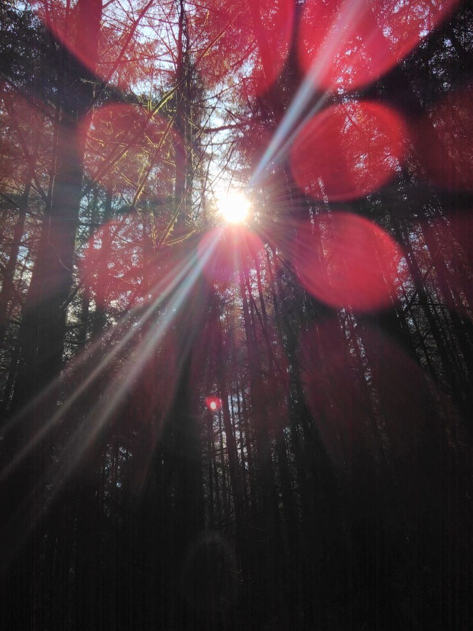 No Filters  Nofilters Lensflare Intothesun Tricks Of Light Forest Trees Woods Dappled