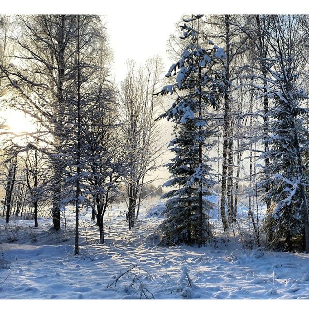 Vinter Instadalarna Leksand Skog Hjortnäs Dalarna