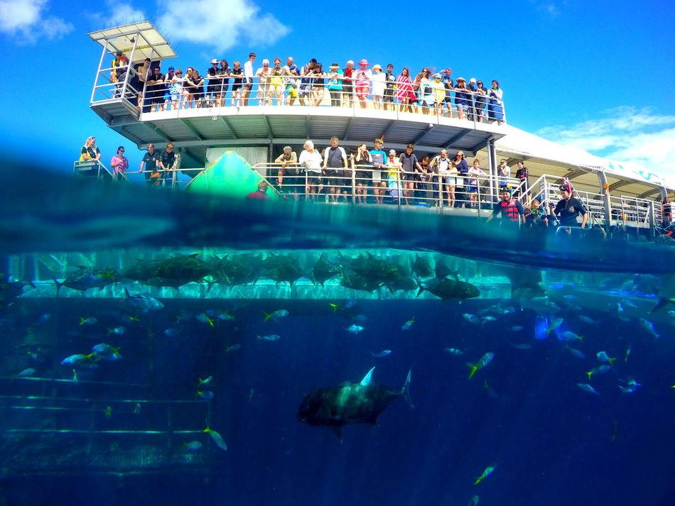 Beautiful stock photos of underwater, Animal Themes, Animal Wildlife, Australia, Beauty In Nature