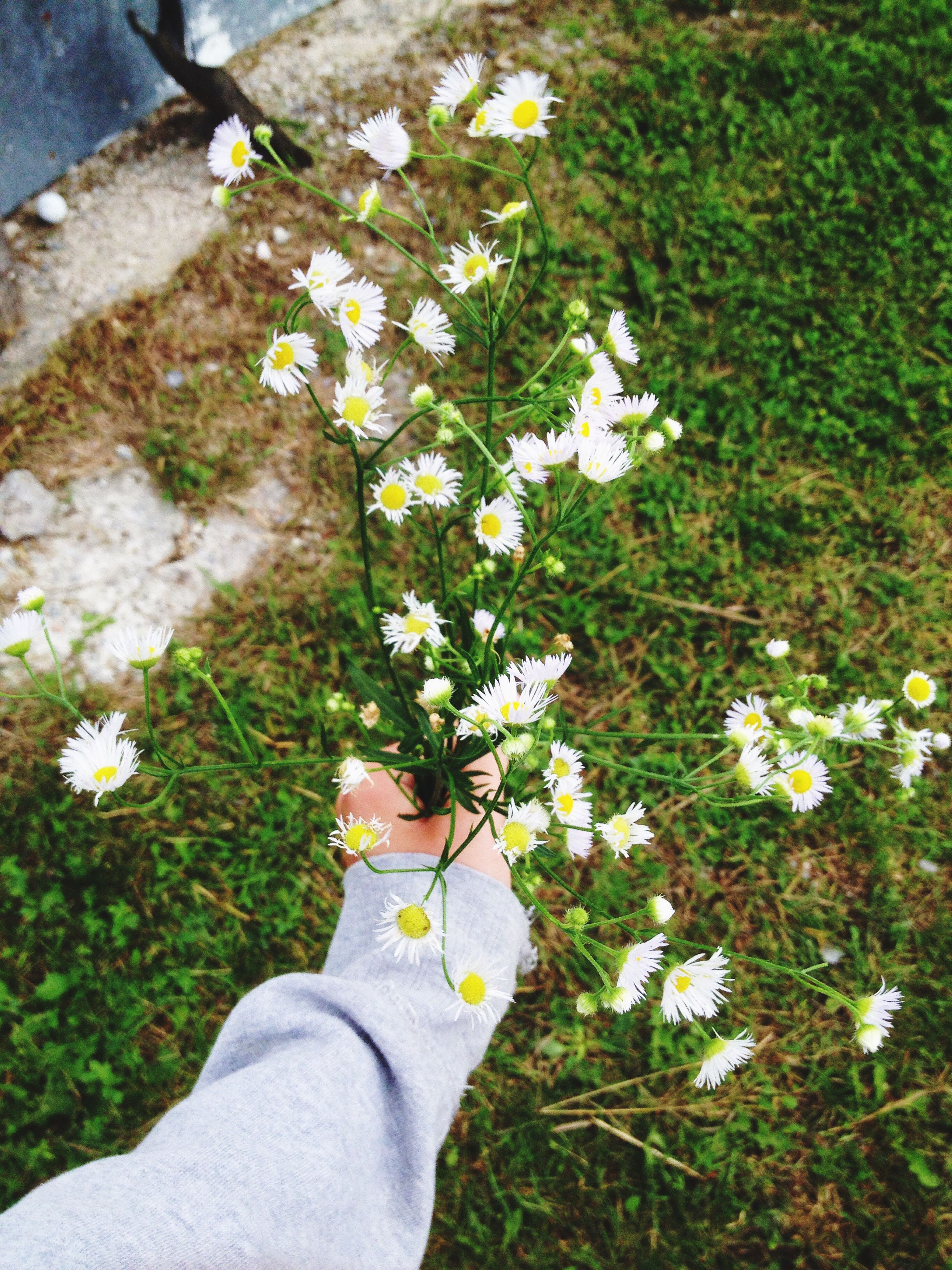flower, human body part, one person, personal perspective, human leg, human hand, real people, growth, nature, low section, day, fragility, plant, outdoors, beauty in nature, close-up, freshness, flower head, people