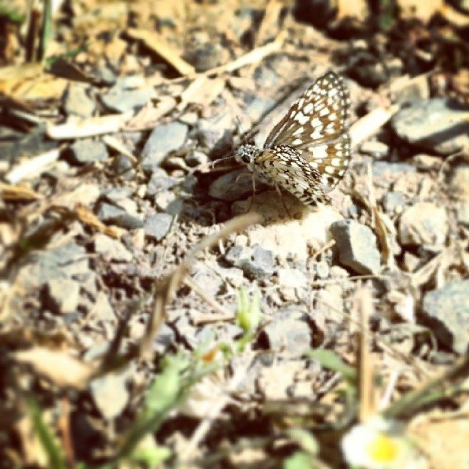 Butterfly! MacroLadilla