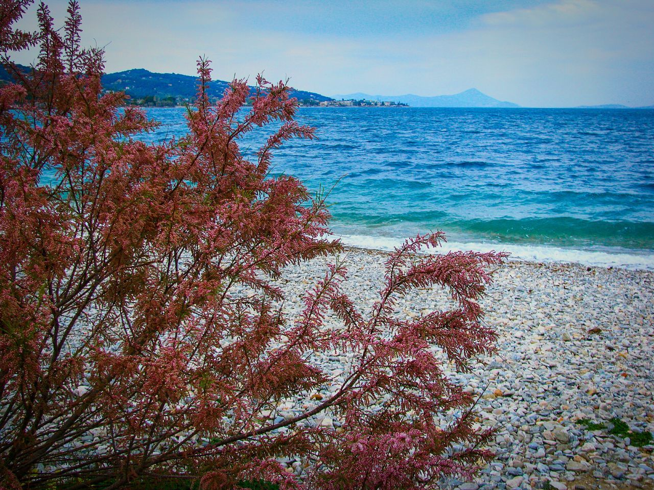 Tamarisk Tree EyeEm Diversity Art Is Everywhere Lonely Beach Shades Of Blue Blue Sea Sea Nature Beauty In Nature Water Scenics Tranquility Seascape Landscape Landscapes Pebble Beach Pebbles Beach Beach Photography Tree And Sea Blossom Red Blossom Blooming Red The Great Outdoors - 2017 EyeEm Awards