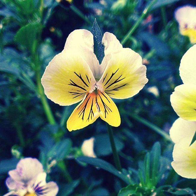 Yellow Flower Nature Vintage Htc8x Picoftheday Instamood Forest Botanical Garden