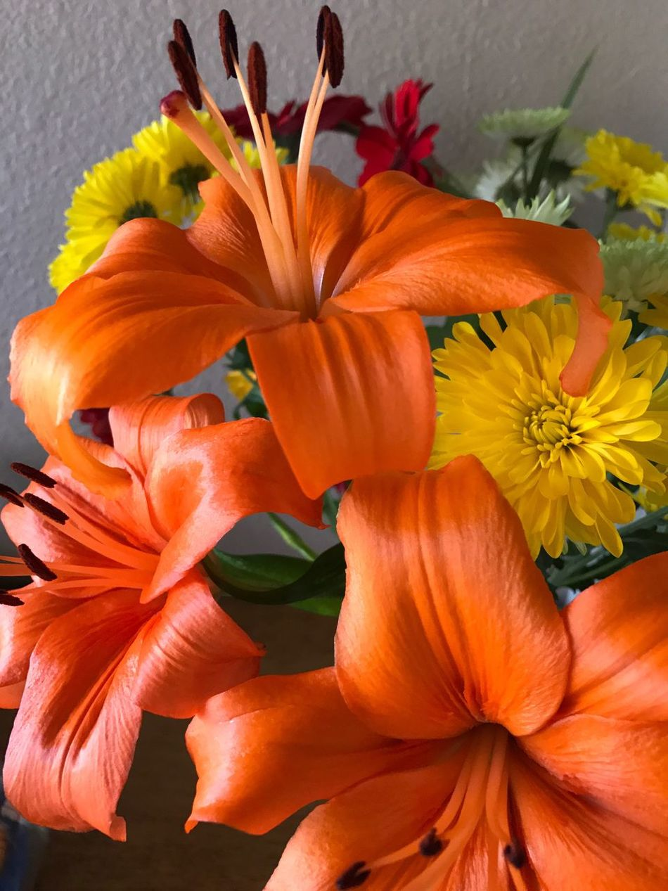 Flower Petal Orange Color Flower Head Fragility Freshness Beauty In Nature Nature No People Close-up Growth Blooming Plant Day Indoors  Day Lily