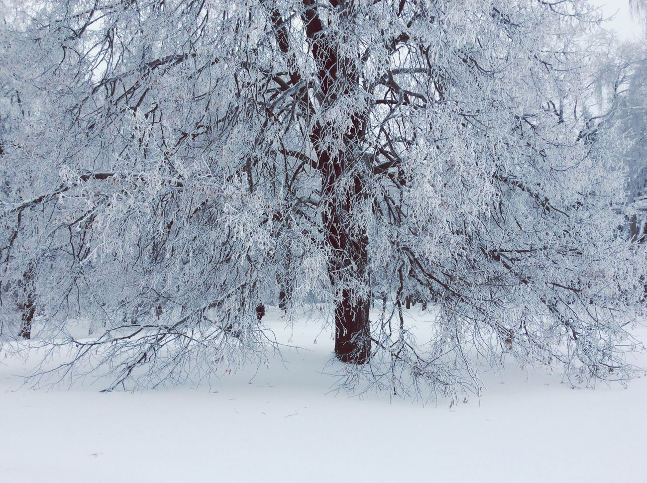 Winter Magic Moments Wintertime Snow Trees Winter Trees Winter Wonderland No People Snow Snowing Beauty In Nature Frozen Tranquil Scene Beauty In Nature Winter_collection Winterscapes