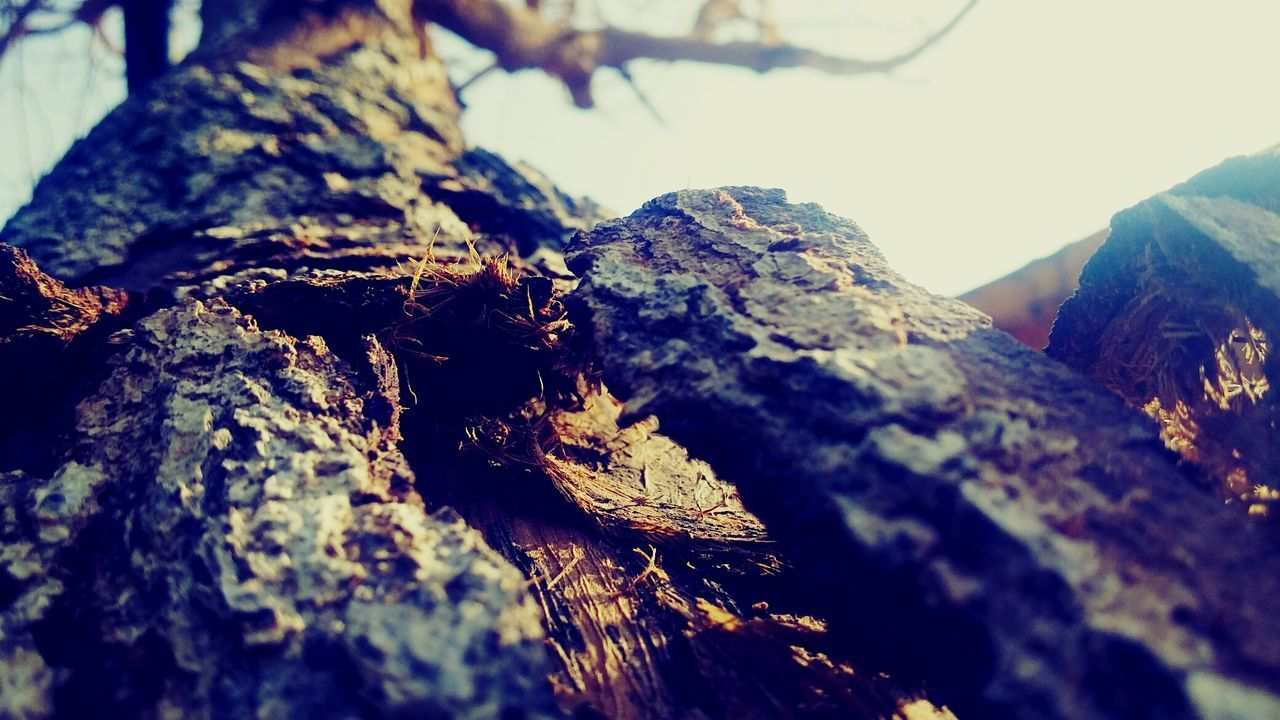 nature, close-up, no people, day, textured, outdoors, tree trunk, lichen, animals in the wild, animal themes, tree
