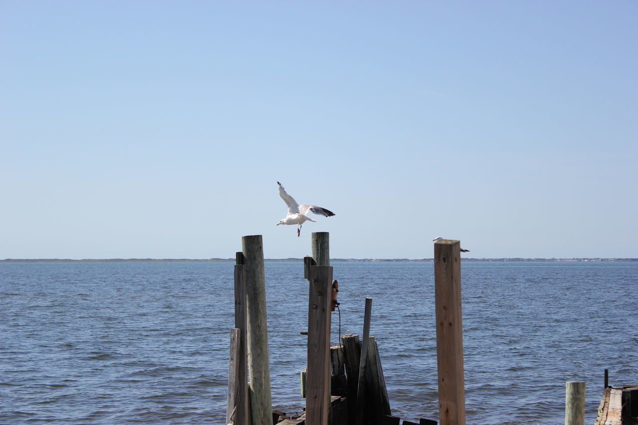 Given to Fly. Animal Themes Animals In The Wild Bird Blue Clear Sky Ocean Seagull Wildlife