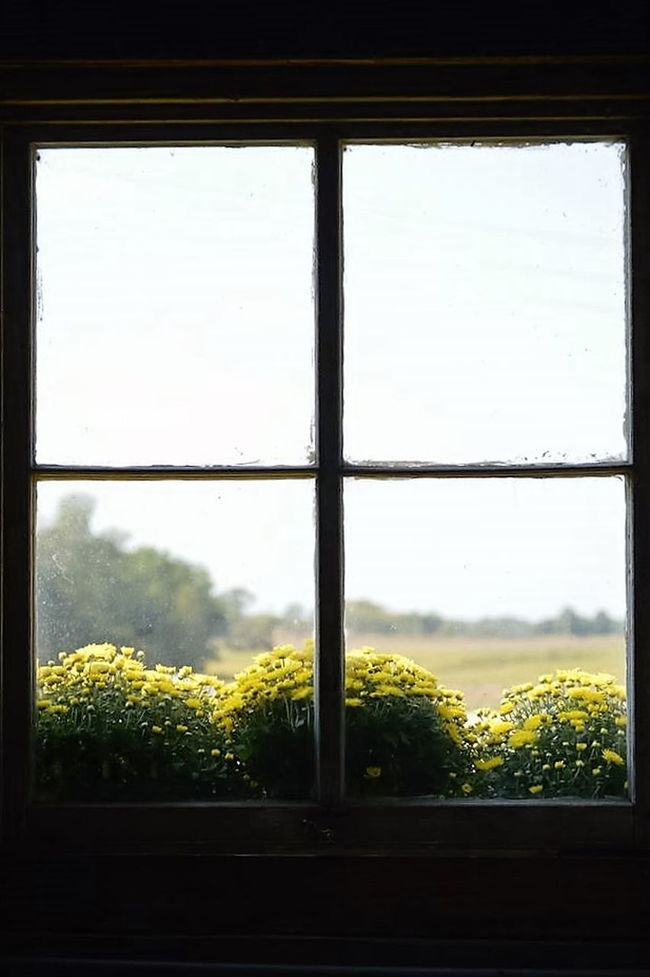 Sunny Day Flowers Country Living Beauty In Nature Barnlove Window Outdoors Photograpghy  Red Barn Love Window Sill Garden Outdoors Flowers, Nature And Beauty Barn Country Life Silhouette Photography Silhouette Nature Back Lightning