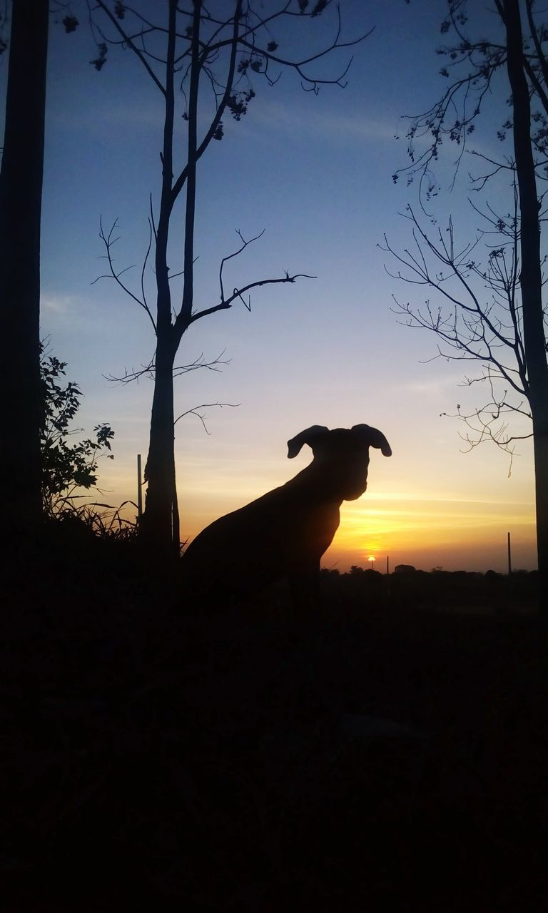 Silhouette Dog On Field Against Sky During Sunset