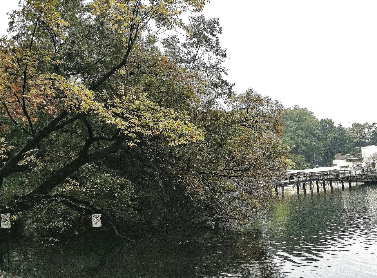 Trees Lake Autumn Fall 秋 Autumn Colours Autumn 2015 Tokyoautumn2015 Nature Tokyonature Urbannature Naturelover. EyeEm Nature Lover Naturecollection Naturephotography Inokashira Park 1913 1918 Gift To Tokyo Emperor Of Japan Tokyo Japan Travel Photography