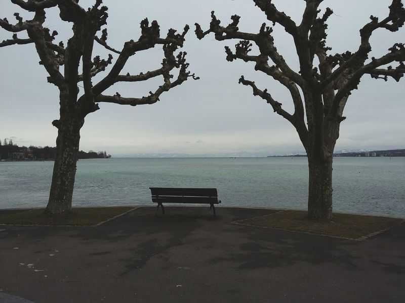 The Bench. · Konstanz Lake Constance Trees Hugging a tree lake seaside winter day grey sky
