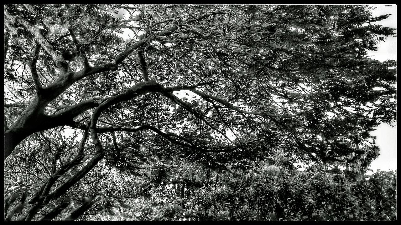 """My Favorite Photo""""Imagine if 🌳trees🌲 gave off WiFi signals,we would be planting so many trees that would Save The Planet Too…But Too bad,they only produce the oxygen We Breathe""""!! Black And White Tree_collection  B&w Photography Monochrome Tree Porn Intricate Photography Black And White Photography Tree And Sky Nature Photography Mobile Photography Monochrome _ Collection Tree Silhouette Nature_collection Black And White Collection  Nature On Your Doorstep B&w Nature Intricate Nature Tree Branches Treescape In My Society Monochromatic Awareness Monochrome_life Color Palette"""