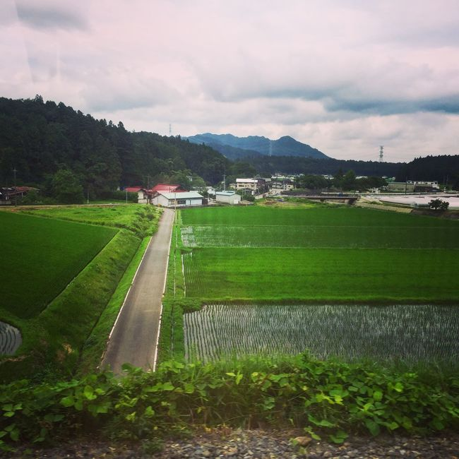 More rice fields in Tochigi