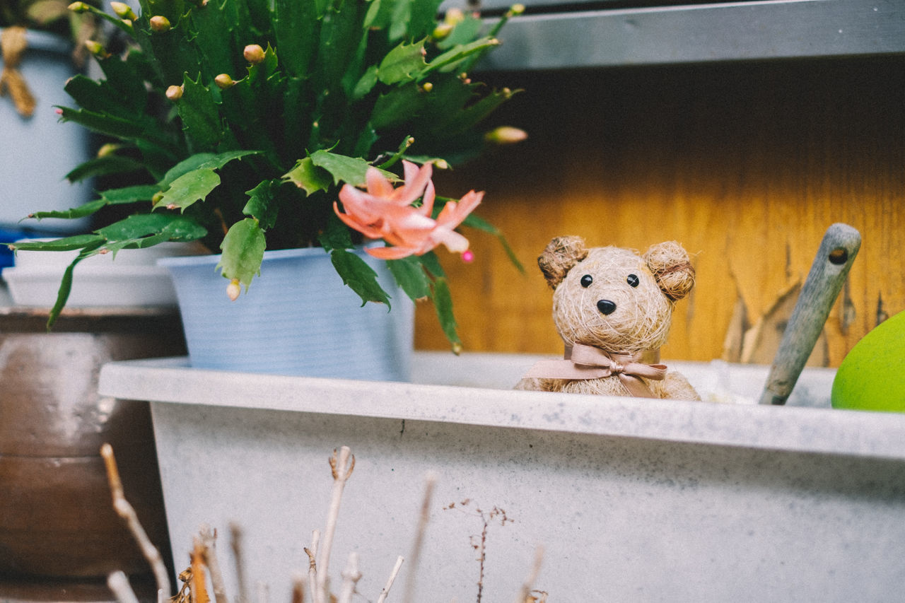 Animal Themes Close-up Day Flower Growth Indoors  Mammal Nature No People Stuffed Toy Tokyo Tokyo Street Photography Tokyo,Japan