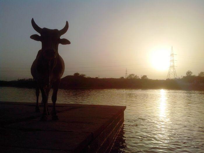 Holiday POV Rajasthan Bueatifulinnature Sunset Nature Photography First Eyeem Photo