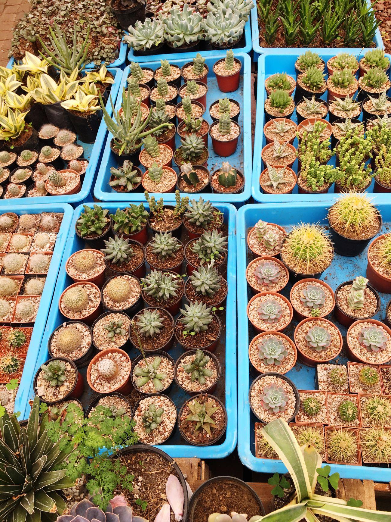 Variation Market No People Mexicomagico Disfrutando De La Vida Cactus 🌵 Adiccion