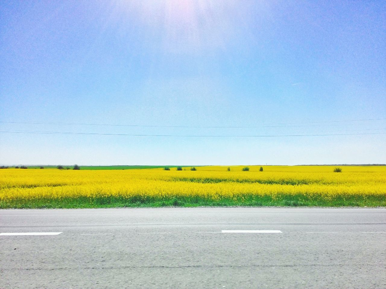Yellow Flower Nature Blue Day Landscape Outdoors Sky Agriculture Freshness No People Crop  Field