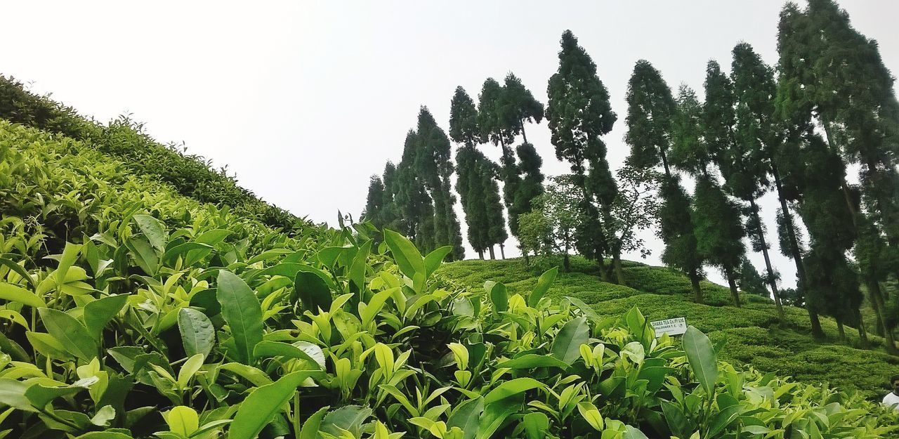 Panoramic View Of Trees And Plants In Park