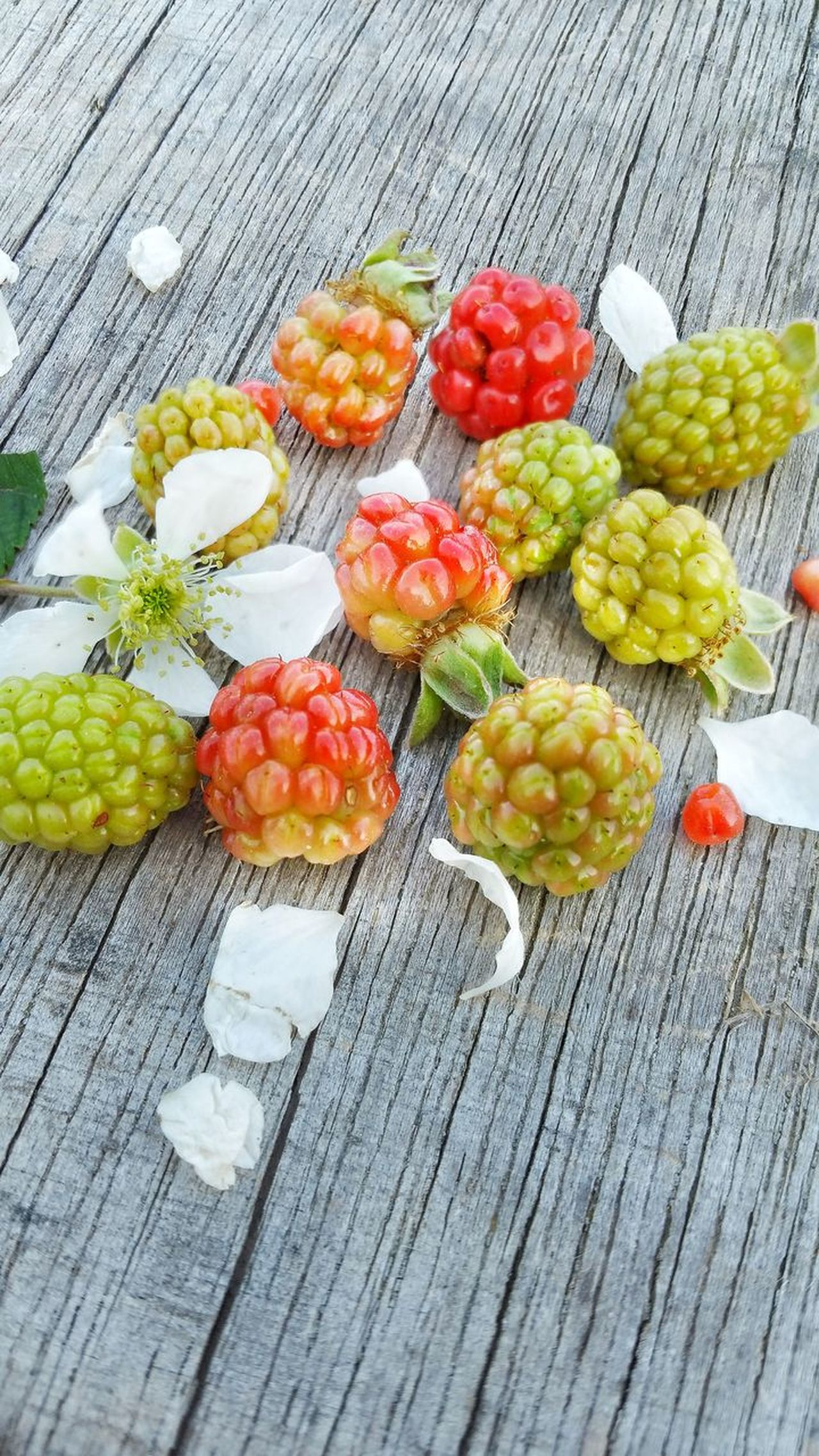 Close-up Berry Fruit Variation Day Outdoors Freshness Fruit Unripe Healthy Eating Nature Wild Berries High Angle View Room For Text Room For Copy Backgrounds Food Weathered Wood Blackberry Flower Ready-to-eat Group Wild Blackberries Dew Berries Bunch Wood - Material Visual Feast