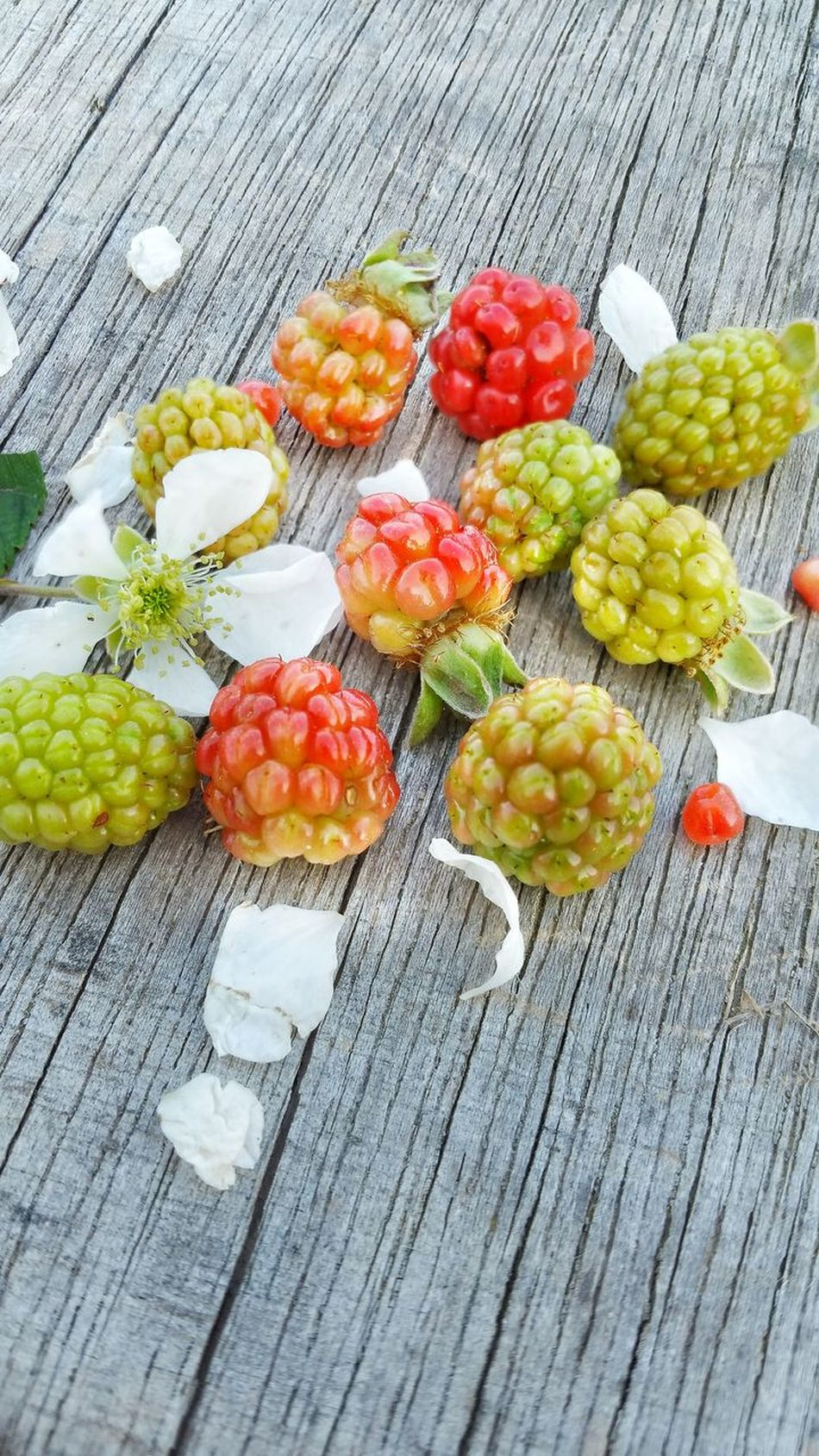 Close-up Berry Fruit Variation Day Outdoors Freshness Fruit Unripe Healthy Eating Nature Wild Berries High Angle View Room For Text Room For Copy Backgrounds Food Weathered Wood Blackberry Flower Ready-to-eat Group Wild Blackberries Dew Berries Bunch Wood - Material
