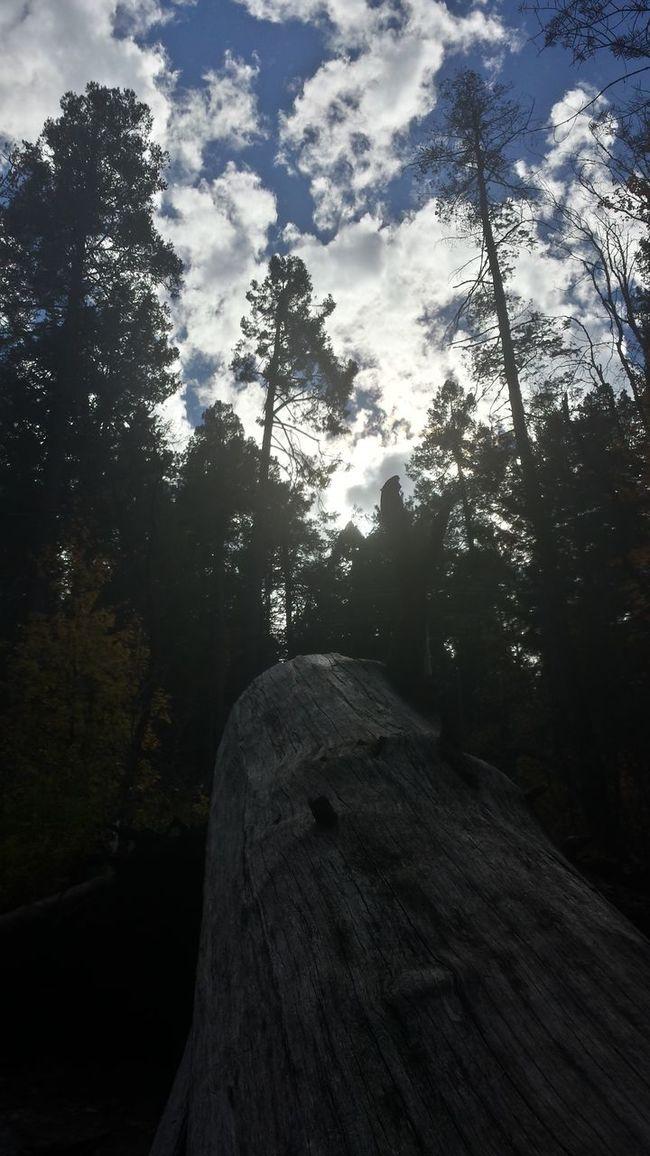 A day on the mountain Halloween Mountlemmon Nature