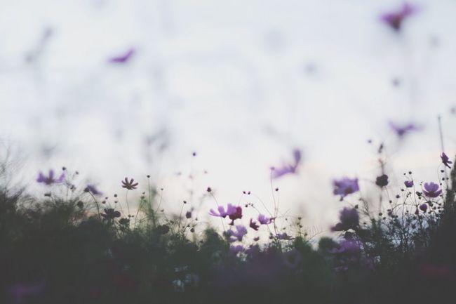 EyeEm Nature Lover Fall Beauty フィルターかけると迷うからスッピン Nature On Your Doorstep Flowerporn EyeEm コスモス EyeEm Best Shots 日本の秋はいいだろう My Best Photo 2015