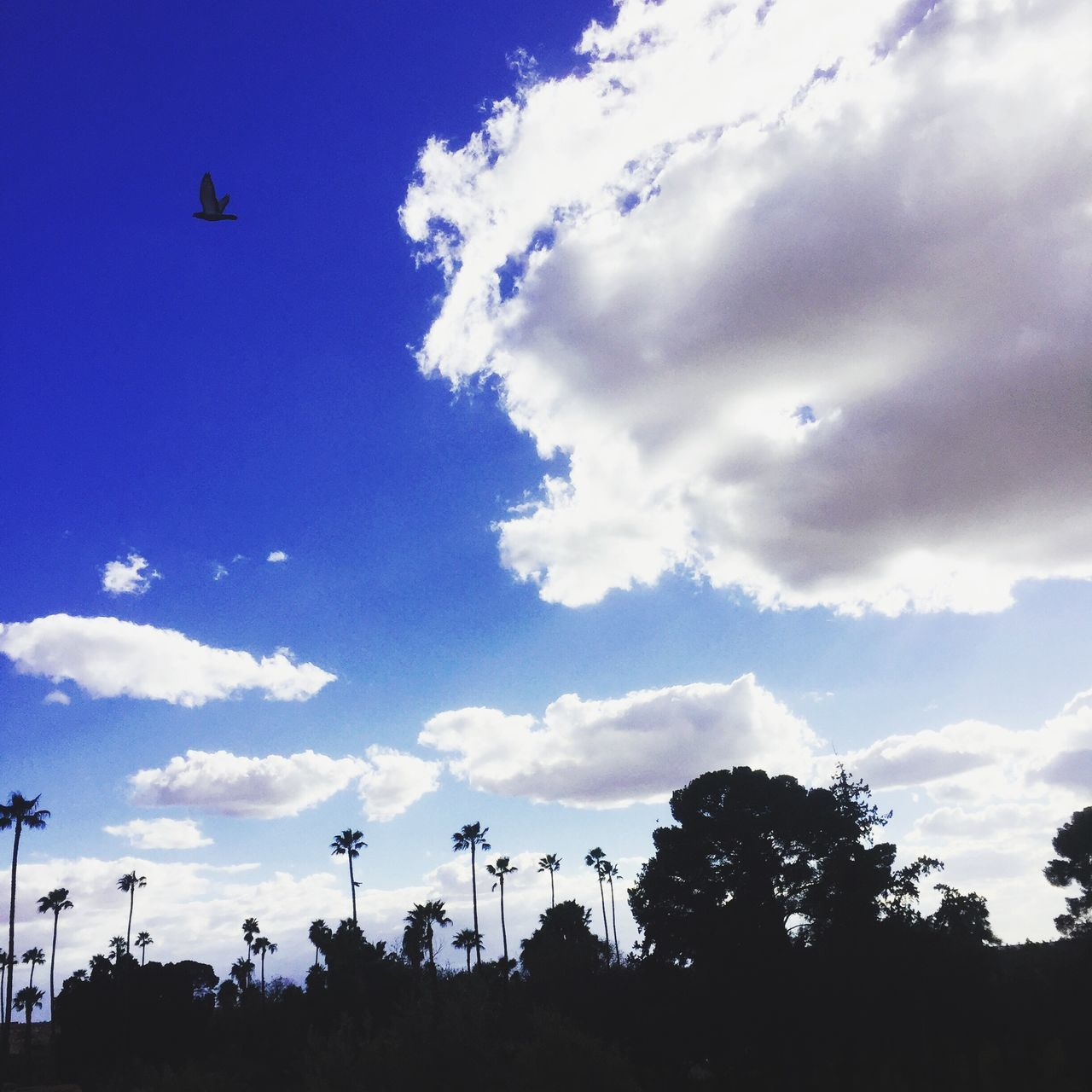 Sky Cloud - Sky Low Angle View Tree Silhouette Day Nature Beauty In Nature Outdoors Blue Scenics No People Marrakech
