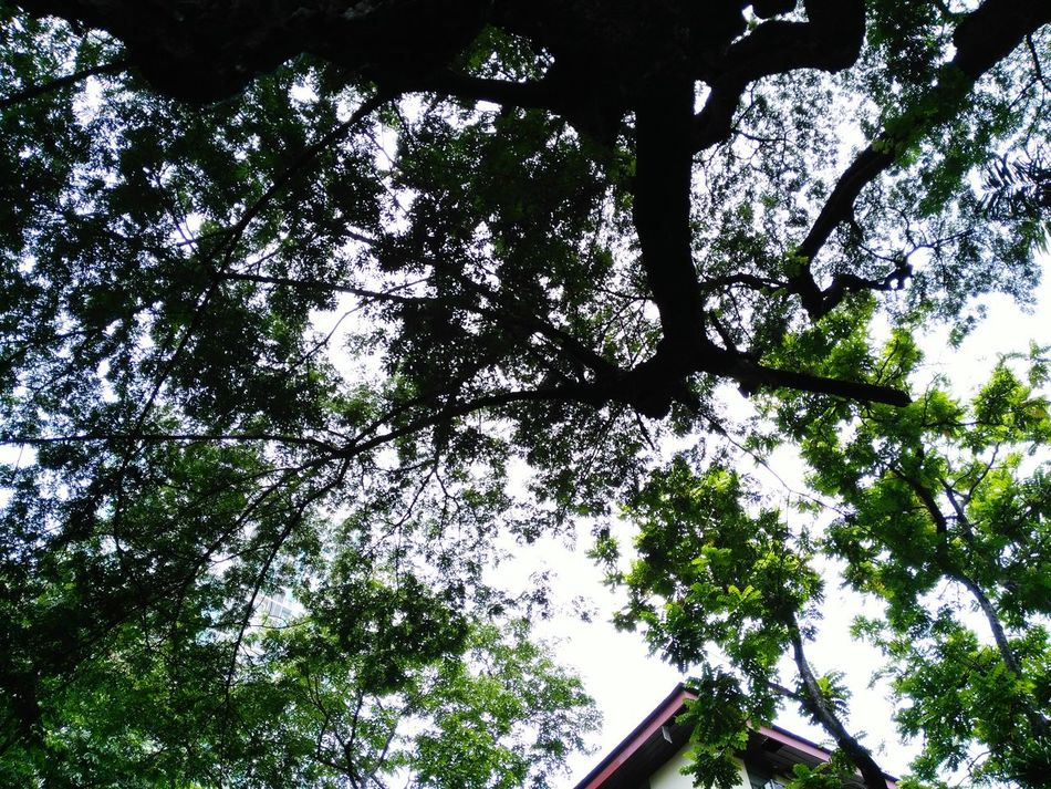 Just look up Nature Photography EyeEm Nature Lover Beauty In Nature at Manila, Philippines Taking Photos Check This Out Sky Trees And Clouds