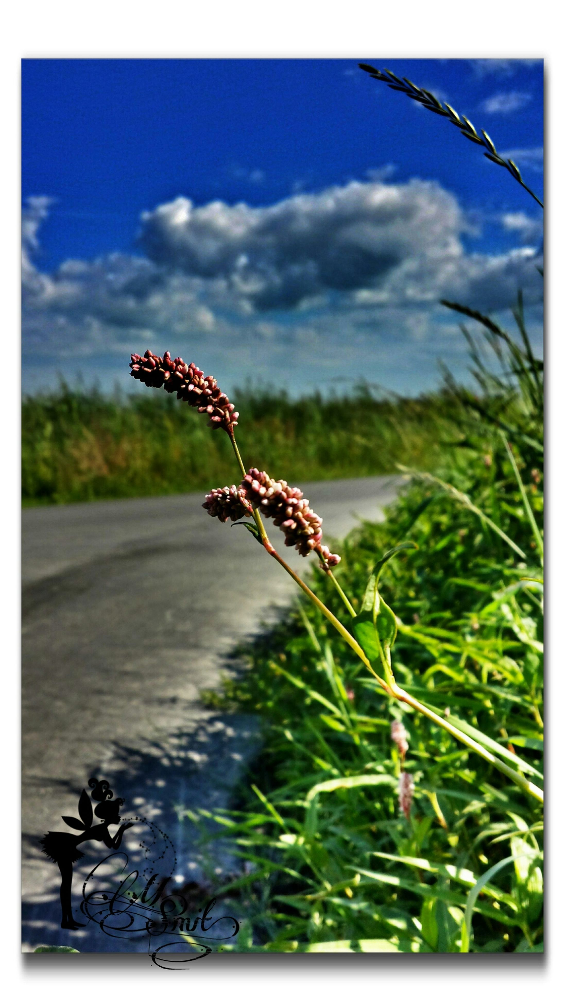 transfer print, auto post production filter, sky, plant, cloud - sky, animal themes, insect, animals in the wild, focus on foreground, wildlife, one animal, nature, outdoors, selective focus, day, cloud, cloudy, close-up, no people, grass