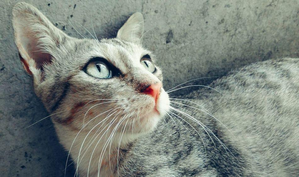 🎈👻 Pets Cats Cute Pets Cat Close-up