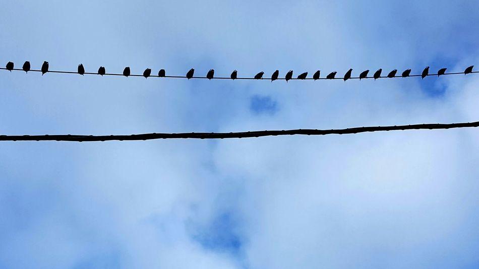 Day Sky Outdoors Nature Bird Birds Wire