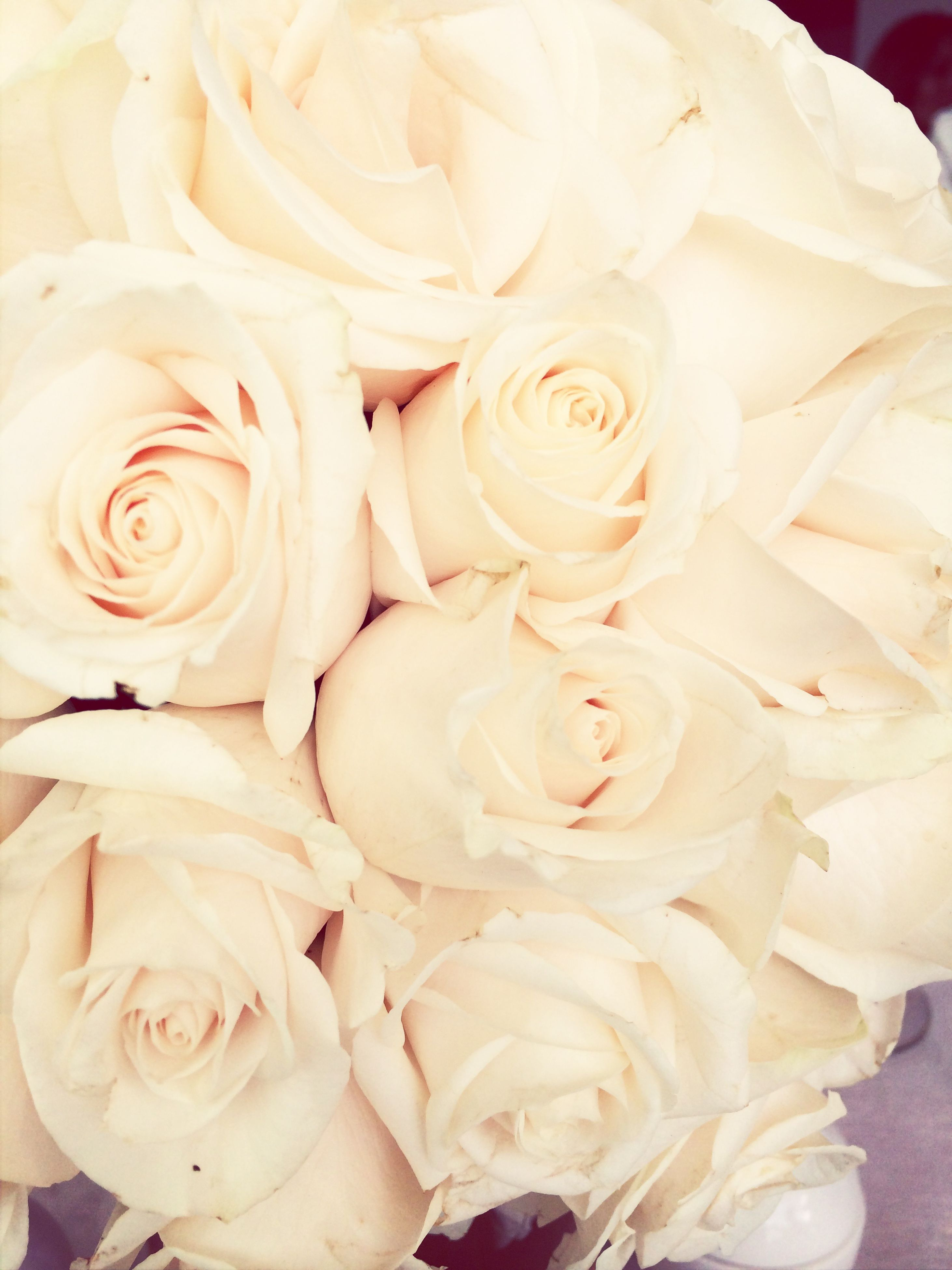 flower, petal, freshness, rose - flower, fragility, flower head, beauty in nature, indoors, full frame, close-up, rose, backgrounds, white color, nature, blooming, growth, high angle view, bunch of flowers, blossom, no people