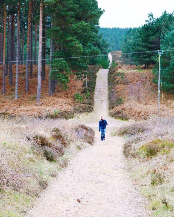Long walk at Cannock chase Forestry Walking