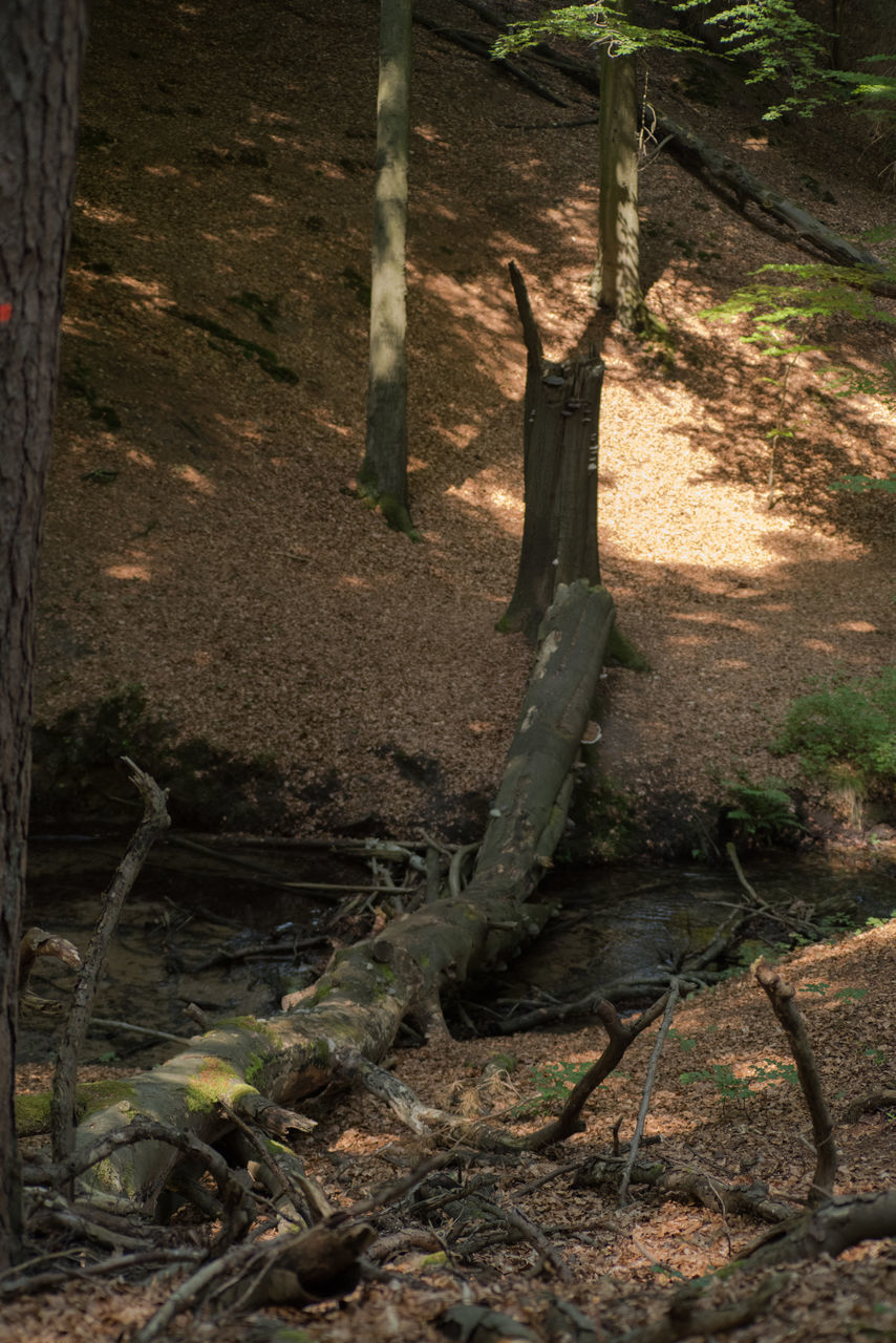 no people, forest, day, tree trunk, outdoors, tree, nature