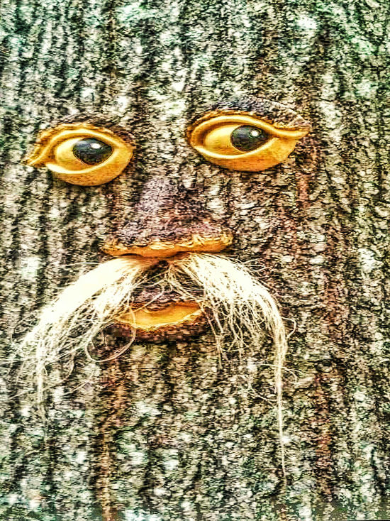 Close-up No People Textured  Full Frame Day Outdoors Backgrounds Tree Art Old Man Crafts Wood Art Funny Faces Eyes Mustache Face TreePorn Tree_collection  Nature Nature_collection Tree Lovers Check This Out Man On The Tree Arts And Crafts Tree Of Life