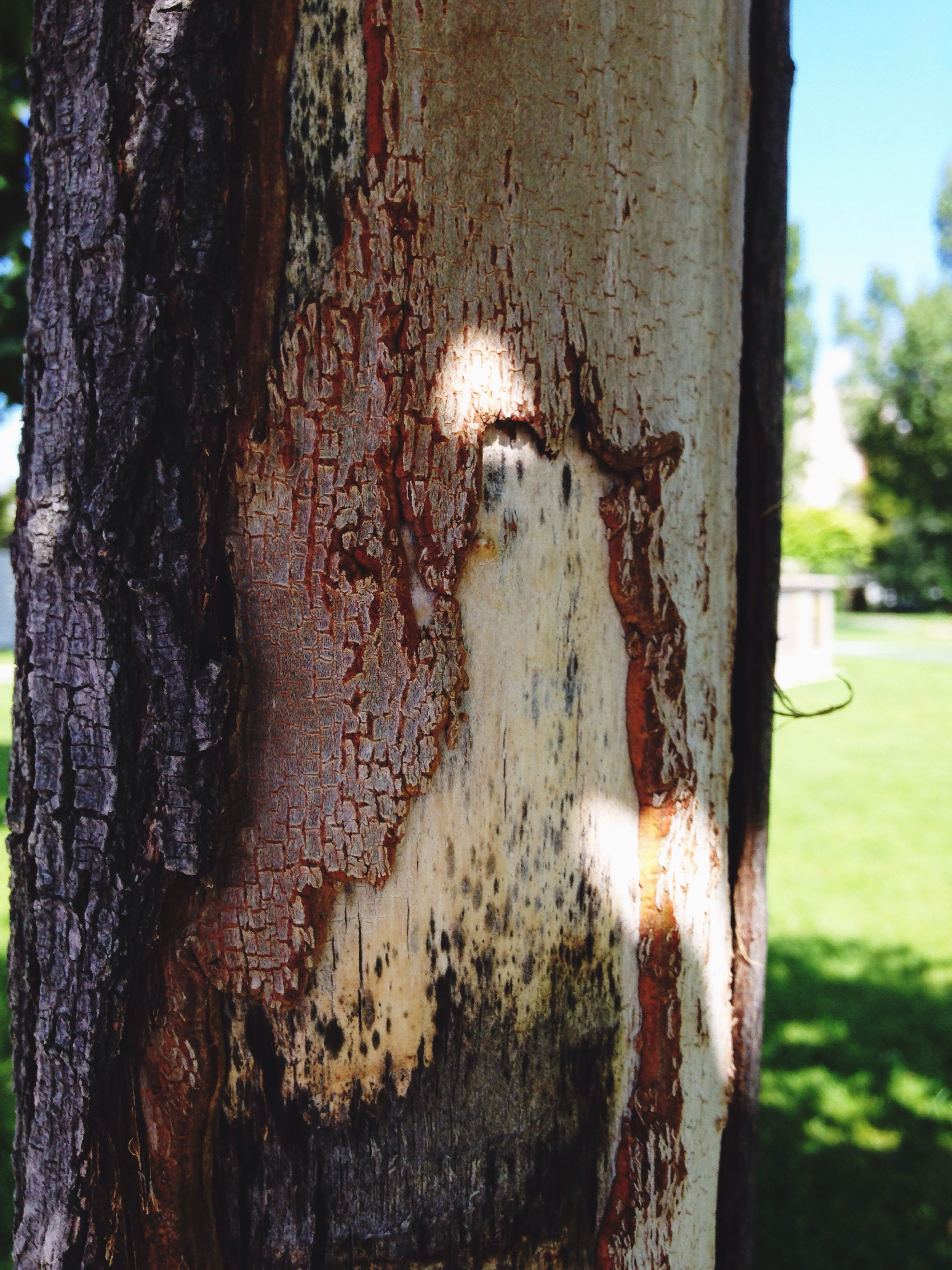 tree trunk, textured, close-up, tree, bark, rough, weathered, focus on foreground, growth, peeling off, nature, day, plant bark, no people, tranquility