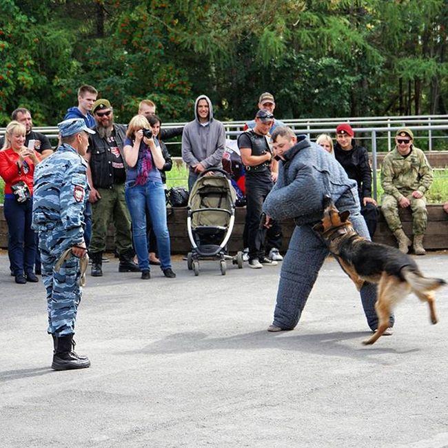 День спецназа Новосибирск спецназ собака момент парк развлечение Dog Animals Nature F4F Instadog Photo Pic Focus Capture Moment
