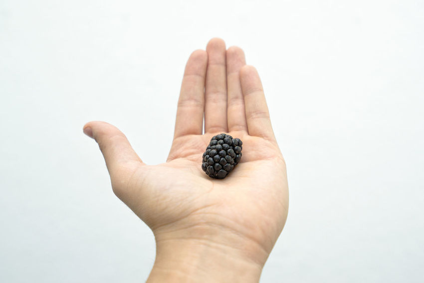 Blackberry Berry Berry Fruit Blackberry EyeEm Best Edits EyeEm Best Shots EyeEm Gallery EyeEm Nature Lover Food Food And Drink Freshness Fruit Healthy Eating Indoors  Natural One Person Person Personal Perspective Unrecognizable Person White Background Foodporn Foodphotography Foodie Food Porn Food Natural Food