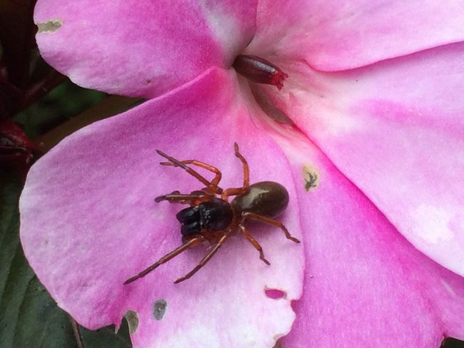 Check This Out Taking Photos Enjoying Life Insects Beautiful Nature Insects Of Eyeem