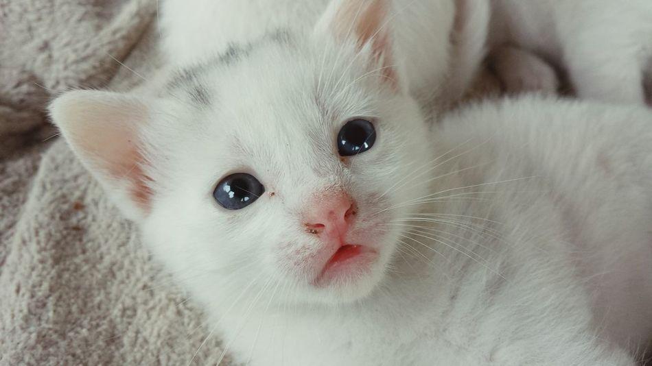 Beautiful stock photos of baby katzen, Animal Themes, Close-Up, Domestic Animals, Domestic Cat