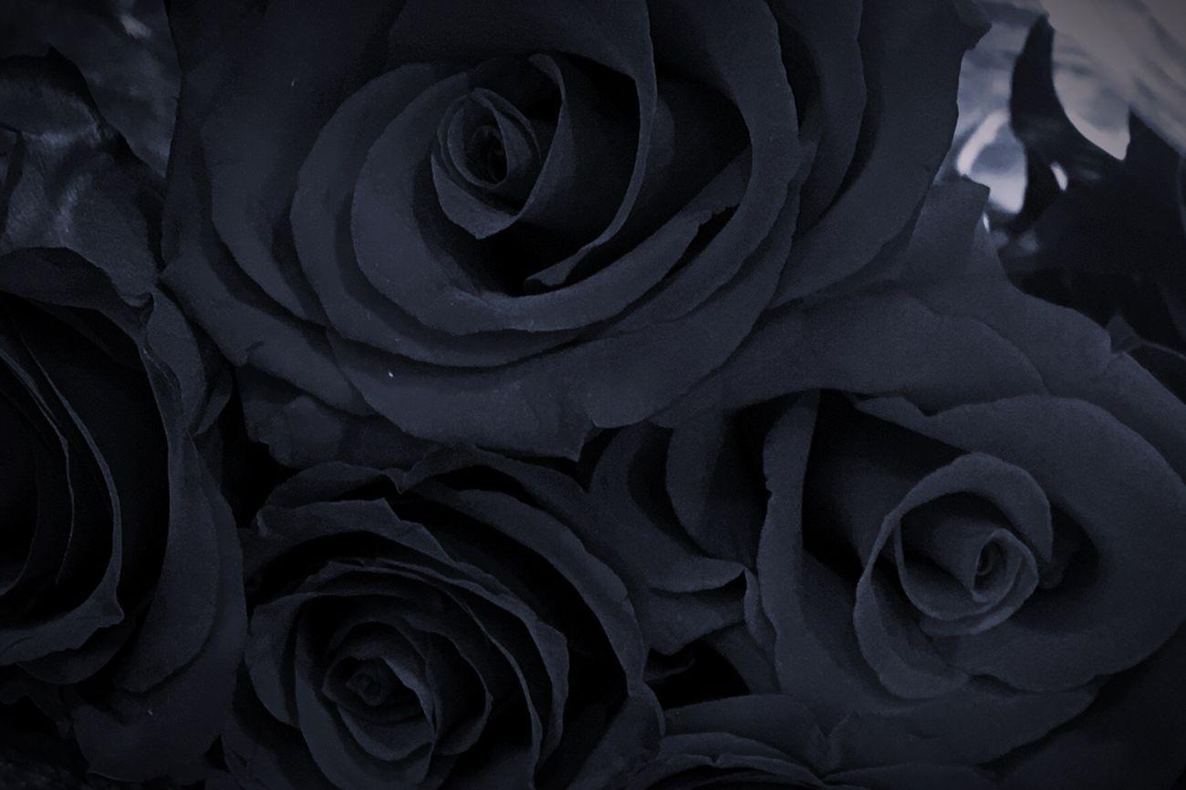 Black Dark Rose - Flower Roses Flower Petal Close-up Fragility Color IPhoneography Rosé Rose Collection Blackrose Flowers Floral Gray Grey Photography Nature Beauty In Nature Nature_collection Nature Photography Bouquet Naturephotography Iphonephotography