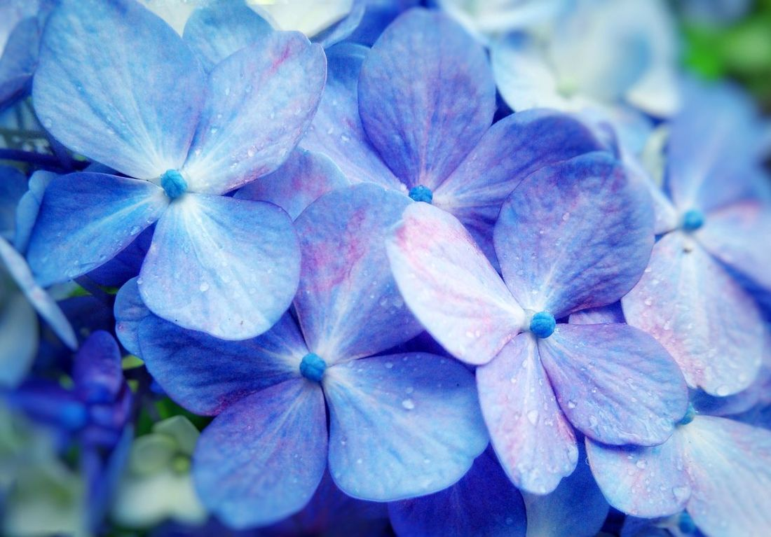 Flower Beauty In Nature Nature Plant Day Flower Head Outdoors Close-up No People Freshness Growth