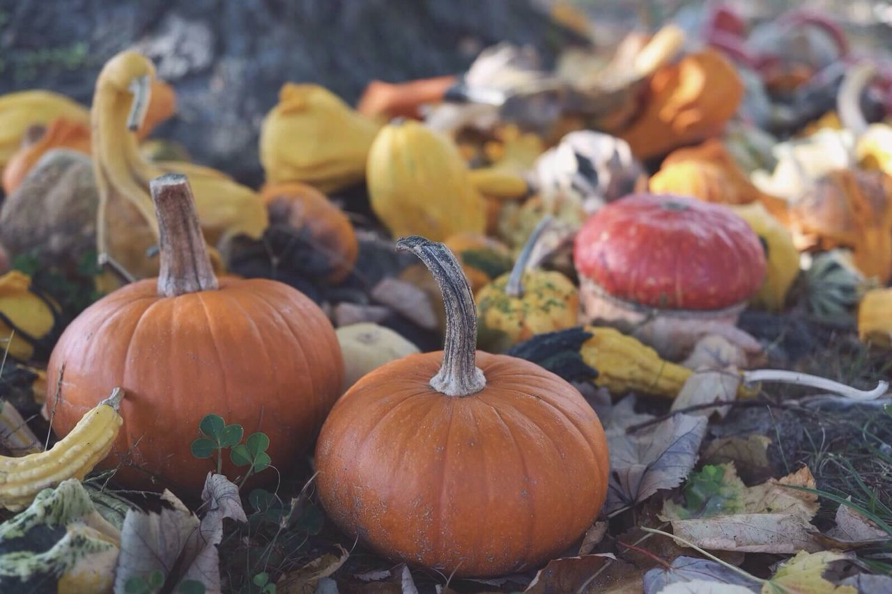 Beautiful stock photos of pumpkin, Agriculture, Autumn, Close-Up, Day