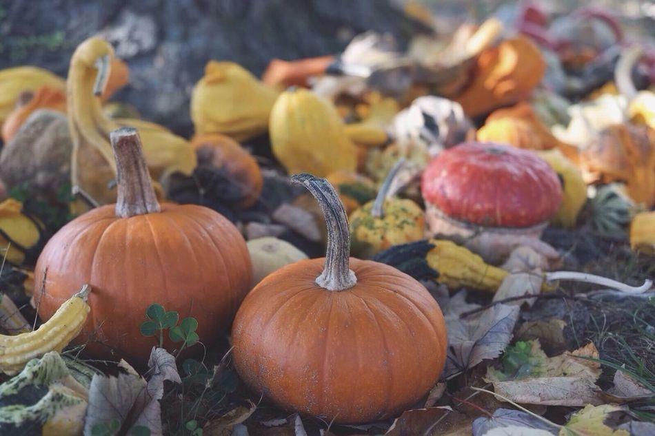 Beautiful stock photos of pumpkin, Agriculture, Autumn, Close-Up, Day