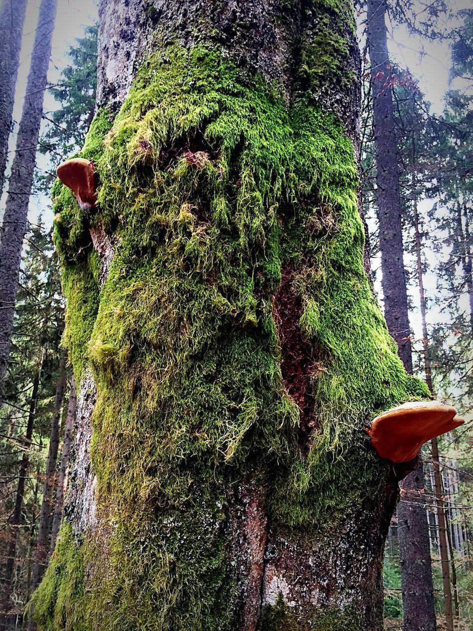 Tree Forest Nature Moss Mushrooms