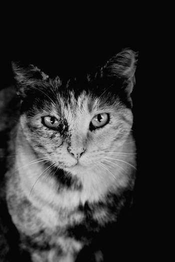 Canon 70d EyeEm The Best Shots Black & White Cat Hello World