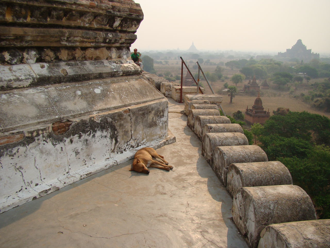 Siesta in Myanmar Animal Themes Steps Travel Destinations Outdoors Mammal Sky Architecture Water No People Place Of Worship Day Nature