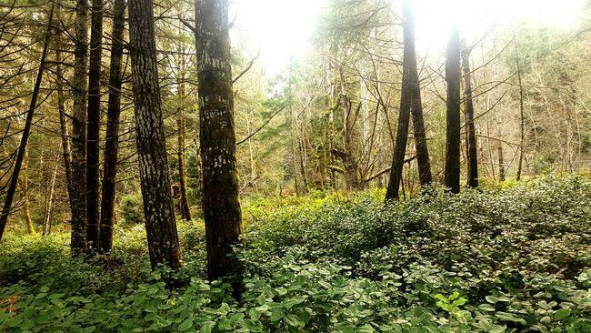 Forest For The Trees EyeEm Best Edits EyeEm Gallery EyeEmBestPics EyeEm Nature Lover EyeEm Best Shots - Nature