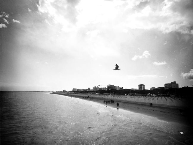 Beach Bird Cloud - Sky Flying Outdoors Remote Scenics Sea Seagull Seagulls Seagulls And Sea Seagulls In Flight Sky Water Waterfront Loneliness Loner Life